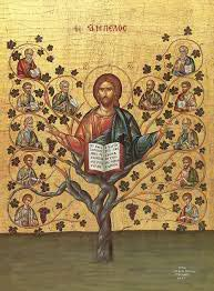 christ the root of the church